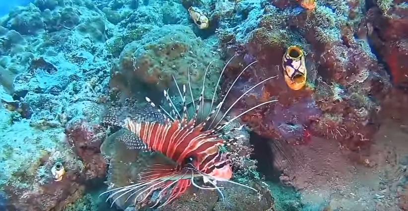 Keindahan Spot Wisata Dive Pasi Gusung Kepulauan Selayar